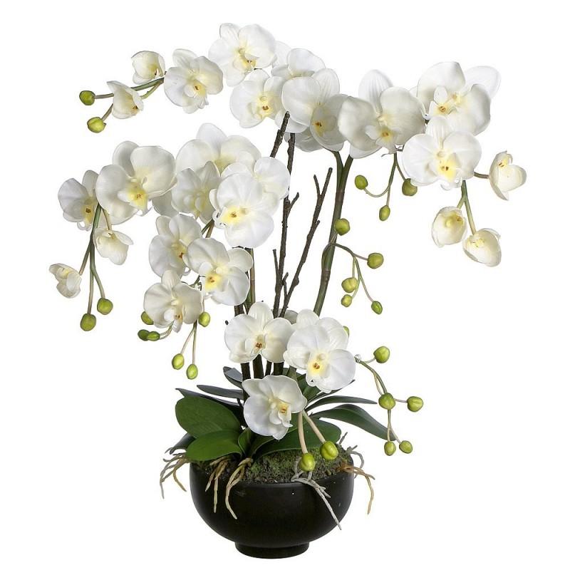 Orchidee phalaenopsis - Vaso in gres per orchidee ...