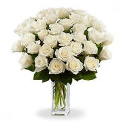 Mazzo di Trentasei Rose Bianche