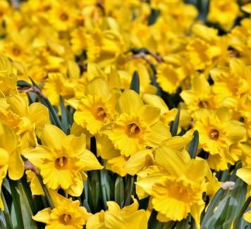 Spedire fiori a casa: quando la scelta è ispirata da un film
