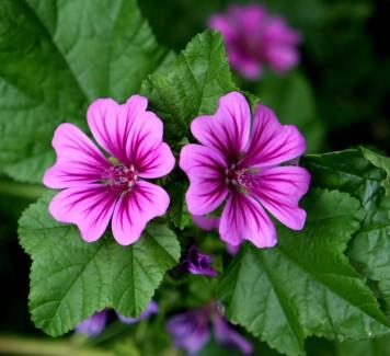 Fiori a domicilio Roma: scopri il fiore bello e benefico