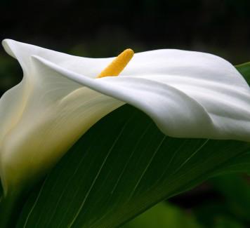 Spedire fiori Roma: il significato dei 3 fiori più richiesti