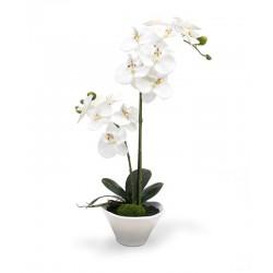 Orquídea blanca de dos ramas en el florero