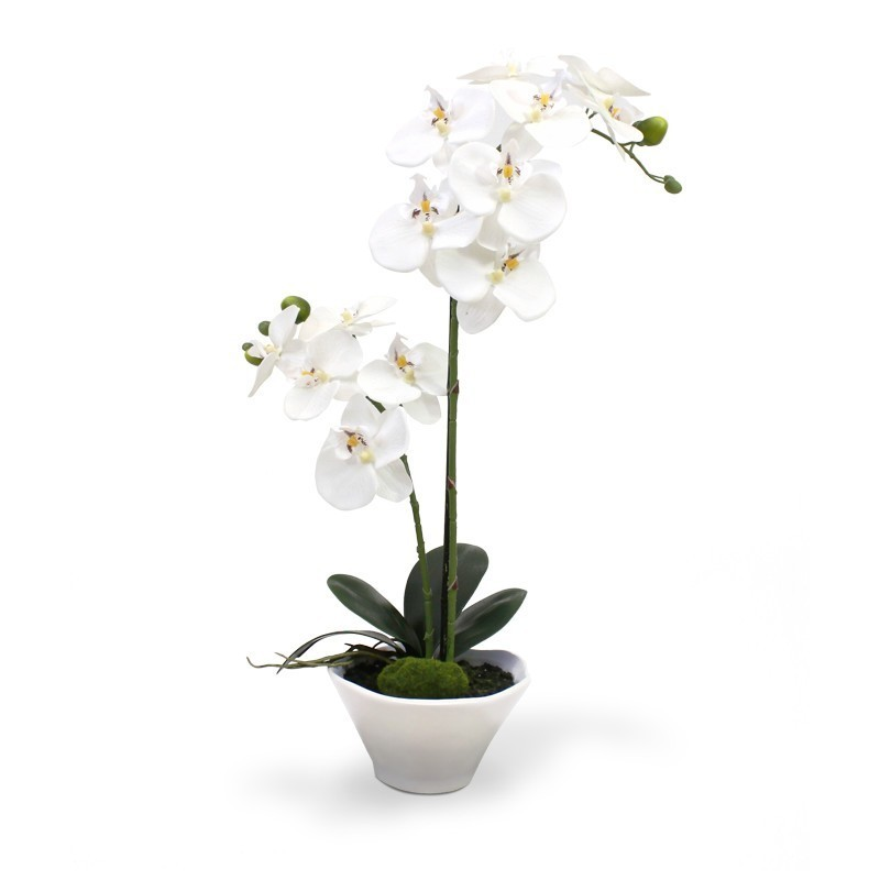 White orchid two branches in vase