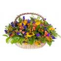 Large basket of Sunflowers, iris, roses orange and red berries