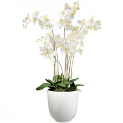 Біла орхідея, три гілки в горщику