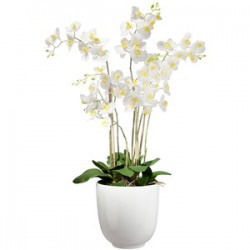 White orchid three branches in vase