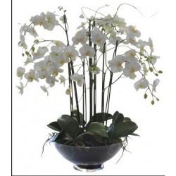Біла орхідея в скляній вазі з 6 або більше гілок