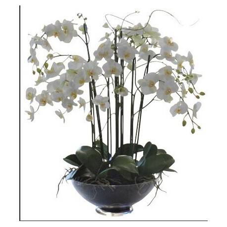 White orchid 6 or more branches