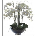 White orchid in a glass vase with 6 or more branches