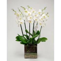 Orchidée en vase en verre