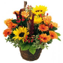 Basket with sunflowers,roses and gerberas by the orange tones.