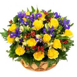 Combinazione di 12 rose gialle bacche rosse e iris blu