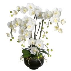 L'orchidée blanche 4 branches dans un vase