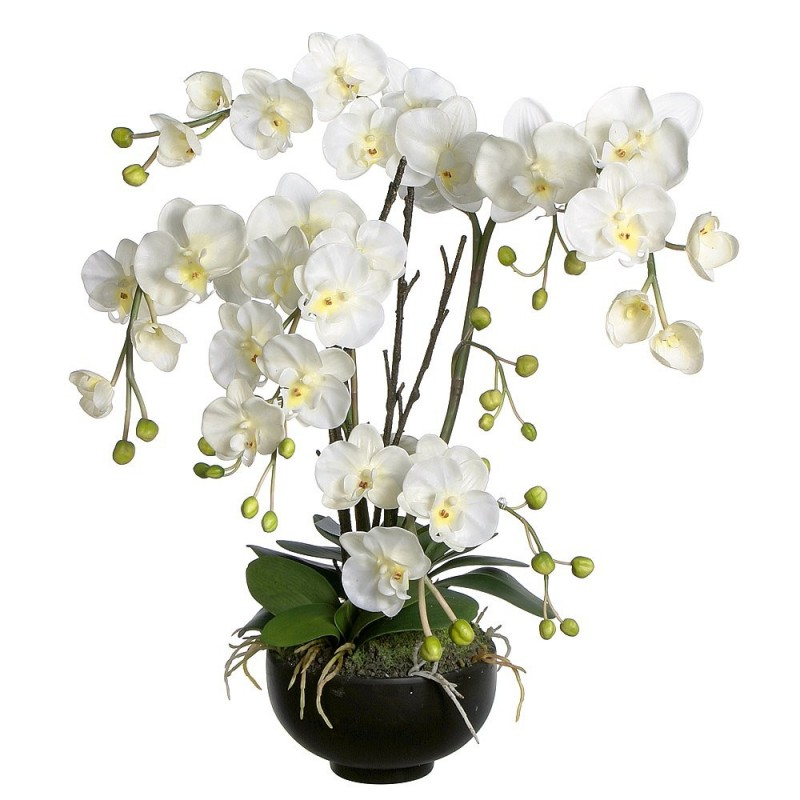 White orchid 4 branches