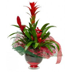 Composition mix bromelia in glass jar