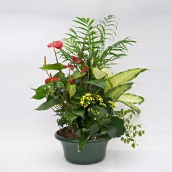 Mix of potted plants