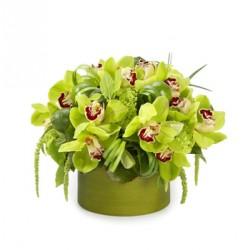 Composizione in vetro di orchidee verdi in foglie di aspidistra