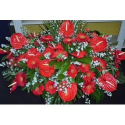Pillow funeral anthurium and gerberas red flowers of the fog