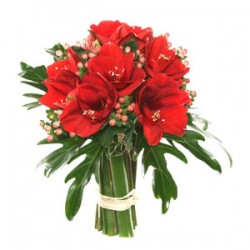 Bouquet of amaryllis red