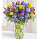 Bouquet of tulips and iris blue