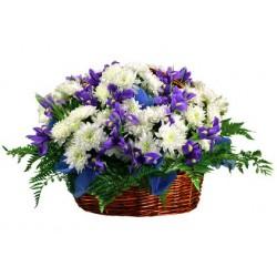 Iris blu e margherite olandesi