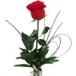 1 Rosa roja en el cuadro de