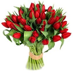 Los tulipanes ,romántica declaración de amor.