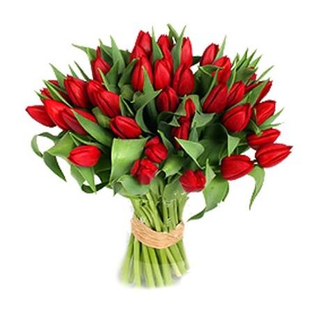Tulips ,romantic declaration of love.