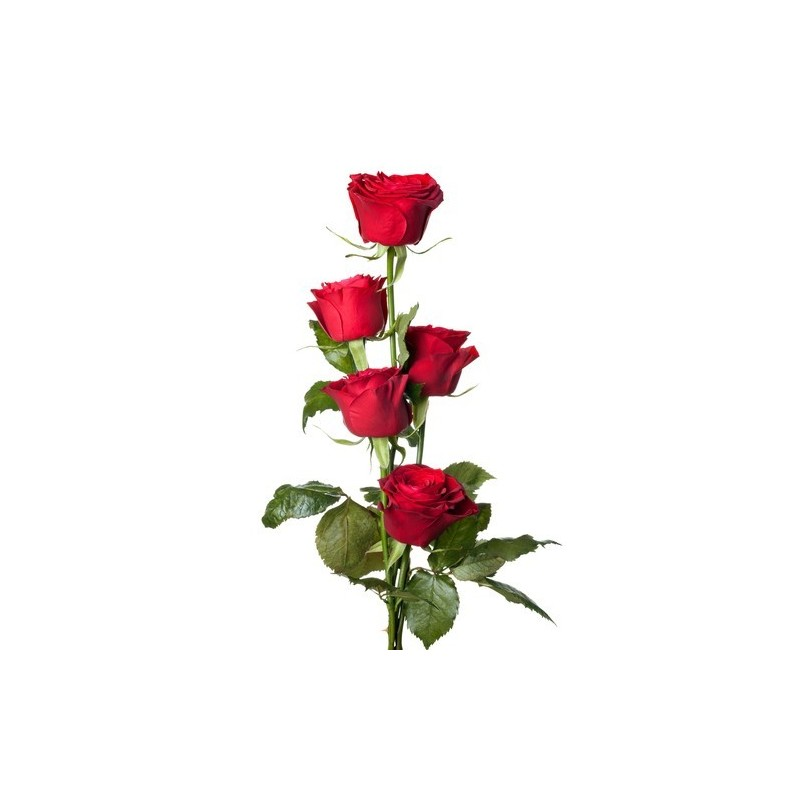 5 red Roses in box