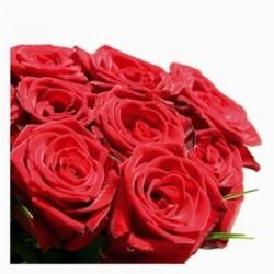 16 rose rosse in confezione
