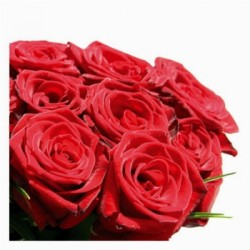 28 red roses in box