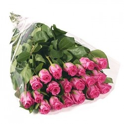 7 pink Roses