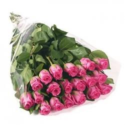 11 Rose rosa