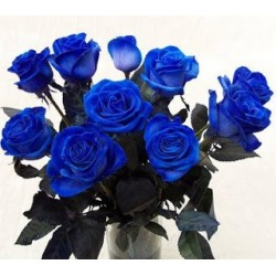 6 Blue Roses