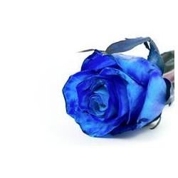 1 Rosa Blu