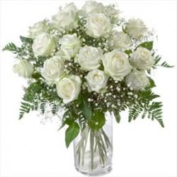 18  di rose bianche