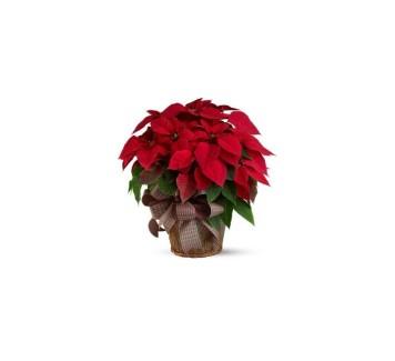Consegna fiori a Roma: un Natale che scalda il cuore