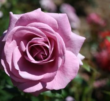 Regalare fiori ad una donna: quando evitarlo