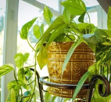 Fiori a Roma: tutti i benefici delle piante da appartamento