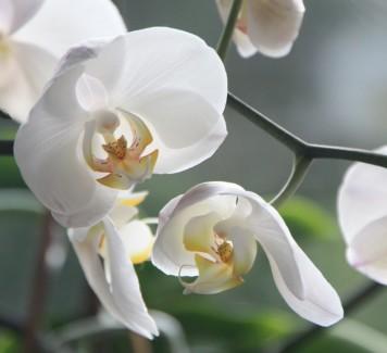 Fiori a Roma: come prendersi cura delle orchidee?