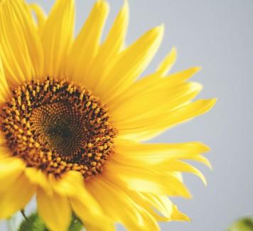 Comunicare emozioni regalando fiori a domicilio