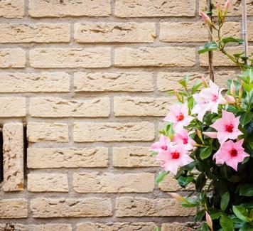 Spedire fiori a Roma: 5 piante da interni da regalare