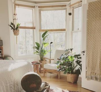 Arredare con le piante: le migliori da acquistare per la propria casa