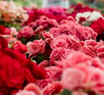 Quali fiori regalare per un compleanno secondo il galateo