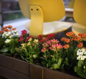Quali piante da fiore scegliere per il terrazzo