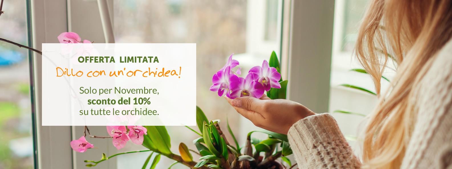 Promo Orchidee